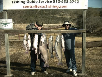 40 lb, 27 lb and 20 lb Catfish caught on January 29, 2009